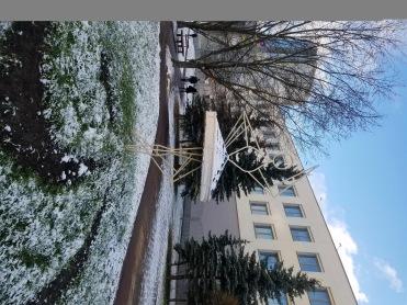Balarina in the Snow